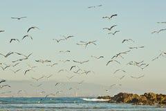 Setzen Sie Szene mit Seemöwen und Vögeln bei Sonnenaufgang auf den Strand Stockfoto