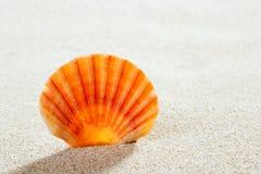 Setzen Sie tropische vollkommene Sommerferien des Sandshells auf den Strand Lizenzfreie Stockfotografie