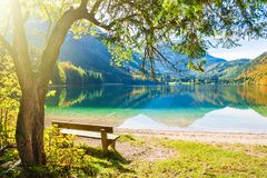 Setzen Sie unter dem Baum auf dem Ufer von See auf die Bank stockfotografie
