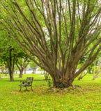 Setzen Sie unter dem Baum im Park, Bangkok, Thailand auf die Bank Stockfoto