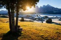 Setzen Sie unter der Kiefer in Region Alpe di Siusi in den Dolomit auf die Bank Lizenzfreie Stockfotos