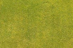 Setzendes grünes Gras Stockfotos
