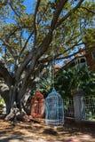 Setzt menschlich-groß großer Vogelkäfig zwei das hängen von Moreton-Bucht F Lizenzfreie Stockfotos