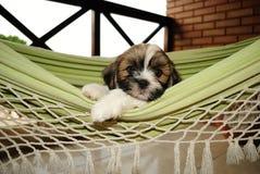 Seu uma vida dos cães Fotos de Stock Royalty Free
