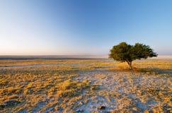 Seul arbre à l'île de Kubu en hiver images stock