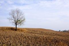 Seul arbre Photos stock