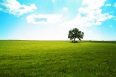 Seul arbre image stock