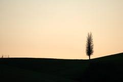 Seul arbre Images stock
