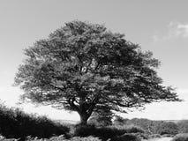 Seul arbre Image libre de droits