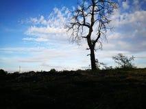 Seul arbre Photo stock