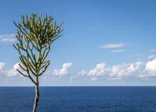 Seul arbre photos libres de droits