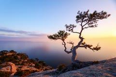Seul arbre au bord de la falaise Photographie stock
