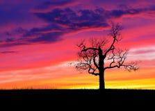 Seul arbre au coucher du soleil Images libres de droits