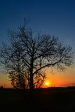 Seul arbre au coucher du soleil Photographie stock