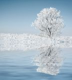 Seul arbre congelé. Photographie stock