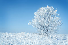 seul arbre congelé image libre de droits