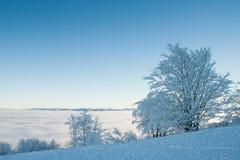 Seul arbre congelé sur le champ d'hiver et ciel bleu avec les nuages rares Photos stock