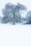 Seul arbre dans la neige Photographie stock libre de droits