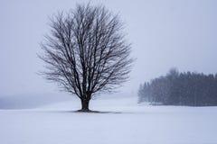 Seul arbre dans le domaine photo libre de droits