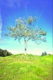Seul arbre dans le domaine Photographie stock libre de droits