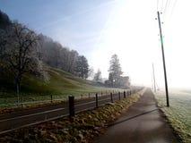 Seul arbre dans le domaine brumeux images libres de droits