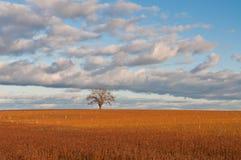 Seul arbre dans le domaine d'automne Photos libres de droits