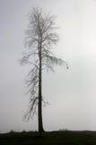Seul arbre dans le regain Photographie stock