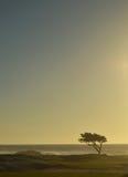 Seul arbre de Cypress à l'océan Photos libres de droits