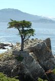 Seul arbre de Cypress sur la péninsule de Monterey Photo stock
