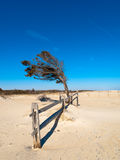 Seul arbre de plage Photographie stock