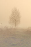 Seul arbre en brouillard Images stock