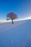 Seul arbre en hiver images stock