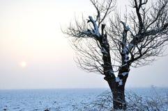 Seul arbre en hiver Photo libre de droits