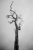 Seul arbre mort photo stock