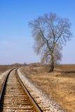 Seul arbre par le chemin de fer Images libres de droits