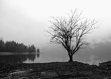 Seul arbre par un lac brumeux Images libres de droits
