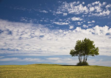 Seul arbre sur la côte Image libre de droits