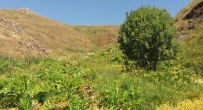 Seul arbre sur la montagne Photographie stock libre de droits