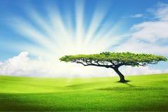 Seul arbre sur la zone d'herbe Photographie stock libre de droits