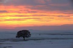 Seul arbre sur le pré au coucher du soleil à l'hiver photographie stock libre de droits