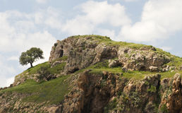 Seul arbre sur Ridge rocheux photographie stock