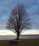 Seul arbre sur une falaise Photographie stock