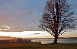 Seul arbre sur une falaise de bord de mer Photographie stock libre de droits