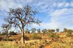Seul chêne dans le pays de chaparal de la Californie Photo libre de droits