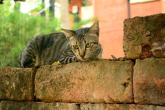 Seul chat Image libre de droits