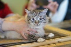 Seul chat sans abri effrayé avec le regard effrayé, se trouvant sur la cage dans la maison de attente d'abri, pour que quelqu'un  Photo stock