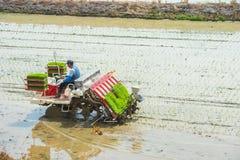 SEUL, COREA DEL SUR - 17 DE MAYO: Arroz que planta por la repicadora del arroz Foto de archivo