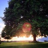 Seul coucher du soleil d'arbre Images libres de droits