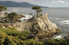 Seul Cypress, Carmel, CA Photo libre de droits