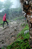 Seul en parc national de Kanchenjunga dans un jour de Rainey Images libres de droits
